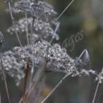 flora (11)