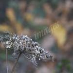 flora (12)