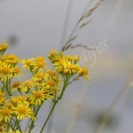 flora (14)