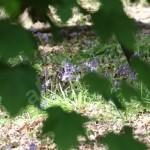 flora (15)