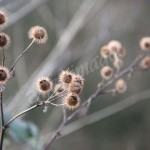 flora (3)
