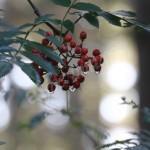 flora (31)