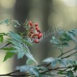 flora (33)
