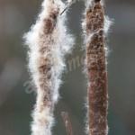 flora (42)