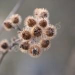 flora (5)