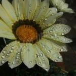 flora1 (1)