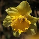 flora1 (11)