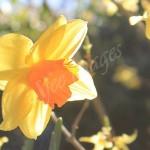 flora1 (14)