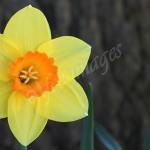 flora1 (16)