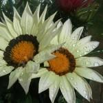 flora1 (2)