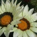 flora1 (3)