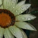 flora1 (4)