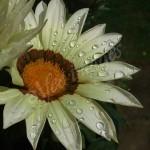 flora1 (5)