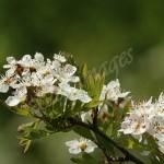 flora1 (52)