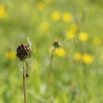 flora1 (53)