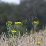 flora1 (63)