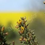 flora1 (69)