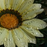 flora1 (7)