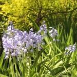 flora1 (80)