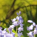flora1 (82)