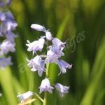 flora1 (84)