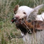 spinone (111)
